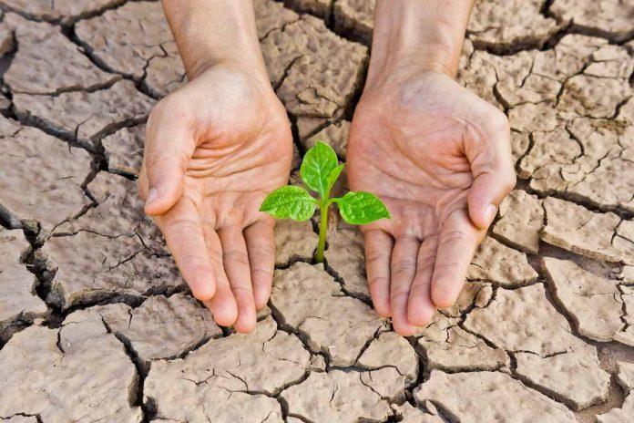 Análise sobre qual a responsabilidade do Direito Ambiental
